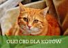 Olejek CBD dla kotów